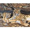 """Канва/ткань с рисунком """"Collection D Art"""" серия 11.000 60 см х 50 см 11485 Тигриная семья"""