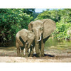 "34072318162 01 ""Слоны"" 52 х 39.5 см"