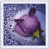 22459280052 Сиреневая роза 80213 25 х 25 см