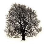 01 Силуэт дерева